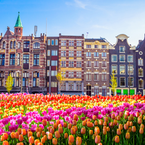 Image for Top things to do while in Amsterdam